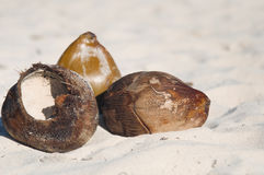 Coconuts on sand. Still Life - coconuts on a tropical white sand beach Royalty Free Stock Images