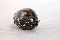 Coconuts on sand Stock Photo