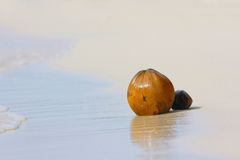 Coconuts on sand beach Royalty Free Stock Images