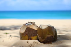 Coconuts in the sand Stock Images
