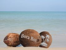 Coconuts in the sand. Coconuts with an engraving in the sand Royalty Free Stock Images