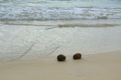 Coconuts in the sand at Floreana island. Galapagos, Ecuador royalty free stock image