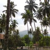 Coconuts in the scene. Trees in the hilly picturesque Royalty Free Stock Photos