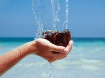 Coconuts in sea. Open coconuts and  coir flowing to the sea Stock Photography