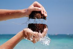 Coconuts in sea. Open coconuts and  coir flowing to the sea Royalty Free Stock Photos