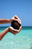 Coconuts in sea. Open coconuts and  coir flowing to the sea Stock Photo
