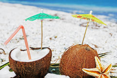 Coconuts, sea star and palm branches Stock Images