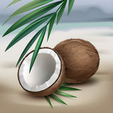 Coconuts on seaside Stock Photography