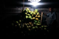 Coconuts seller. A coconuts seller sell his coconuts in the Night Stock Image