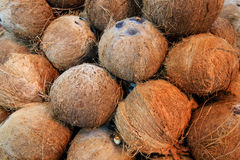Coconuts with Shell. Group of unprocessed Coconuts with its shell and coir Stock Photography