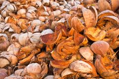 Coconuts shells Stock Photography