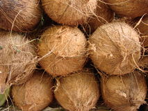 Coconuts on the shelves of markets India. Coconuts on the shelves of markets of India closeup Royalty Free Stock Images