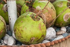 Coconuts. A shot of coconut fruits Royalty Free Stock Photo