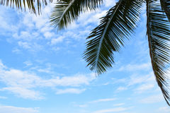 Coconuts sky at vietnum Stock Images