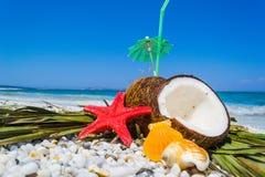 Coconuts, starfish and shells Royalty Free Stock Image