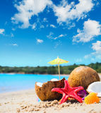 Coconuts and starfish by the shore Stock Images