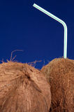 Coconuts with Straw stock photography