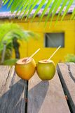 Coconuts straw cocktail tropica yellow house. Fresh coconuts straw cocktail tropical caribbean yellow house palm trees Royalty Free Stock Photography