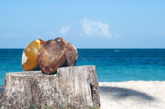 Coconuts on stump. Still Life - coconuts on the stump against the blue sky and ocean Royalty Free Stock Photo