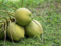 Coconuts. Thai coconuts is sweet drink Stock Photography