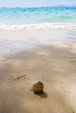 Coconuts to the sea. Royalty Free Stock Photography