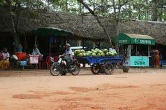 Coconuts transportation Royalty Free Stock Photos