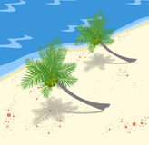 Coconuts Tree On The Beach Royalty Free Stock Photography