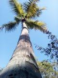 A coconuts tree beauty beach Royalty Free Stock Photo