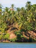 Coconuts trees Stock Photos
