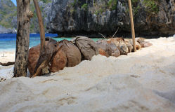 Coconuts on the tropical beach. Tropical beach near El Nido village in Philippines Royalty Free Stock Photography