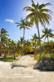Coconuts on tropical beach path, cuba. Tropical beach with wooden pathway in the sand and coconut palm trees, cayo coco, cuba Stock Photo