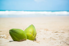 Coconuts on a tropical beach Stock Photography