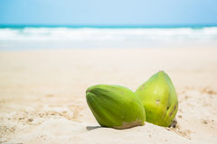 Coconuts on a tropical beach Royalty Free Stock Photography