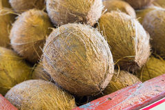 Coconuts. In tropical produce market Royalty Free Stock Image