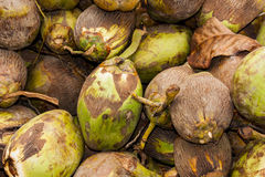 Coconuts. View at fresh coconuts on the market Stock Photo