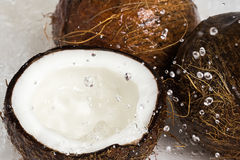 Coconuts and water splash Royalty Free Stock Image