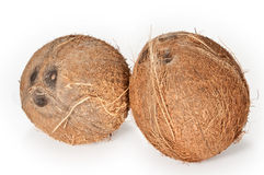 Coconuts on a white background. Two coconuts isolated on a white background stock images
