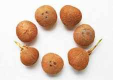 Coconuts on a white background. Top view Royalty Free Stock Photos