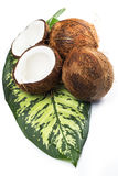 Coconuts on white background Stock Photos