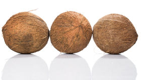 Coconuts on white background Stock Images