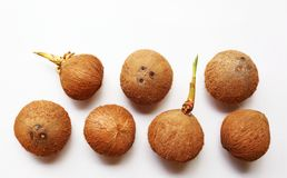 Coconuts on a white background. Top view Stock Photos
