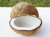 Coconuts on the white isolated over blurred grass background Stock Images