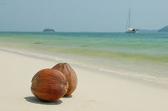 Coconuts on the white sandy beach of Thailand Royalty Free Stock Photo