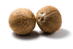 Coconuts whole. Two fresh, whole coconuts on white background Royalty Free Stock Photography
