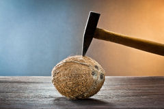 Coconuts on wood Royalty Free Stock Image