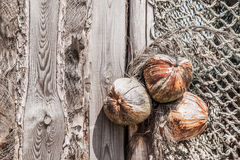 Coconuts on the wooden wall. Retro dry wooden plate with three coconuts Stock Photo