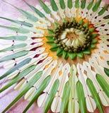 从coconuttree各种各样的叶子创造的手工制造艺术  库存照片