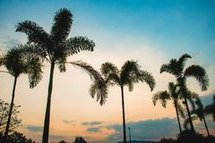 Coconuttrees силуэта на предпосылке захода солнца стоковое изображение rf