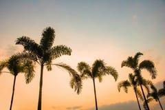 Coconuttrees da silhueta no fundo do por do sol Imagens de Stock Royalty Free