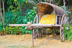 Cocoon cart Royalty Free Stock Photo